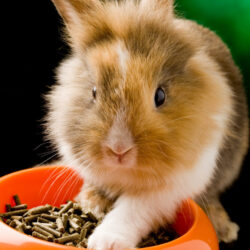 Pellets Are for Rabbits, Not Menopause Symptoms