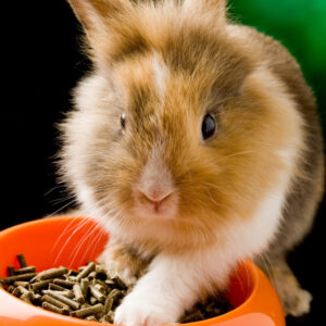 Rabbit with food bowl filled with pellets | Pellets are not for menopause symptoms | CU OB-GYN | Denver, CO